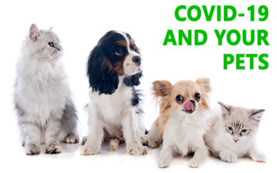 Helpful Questions and Answers Regarding COVID-19 and Pets